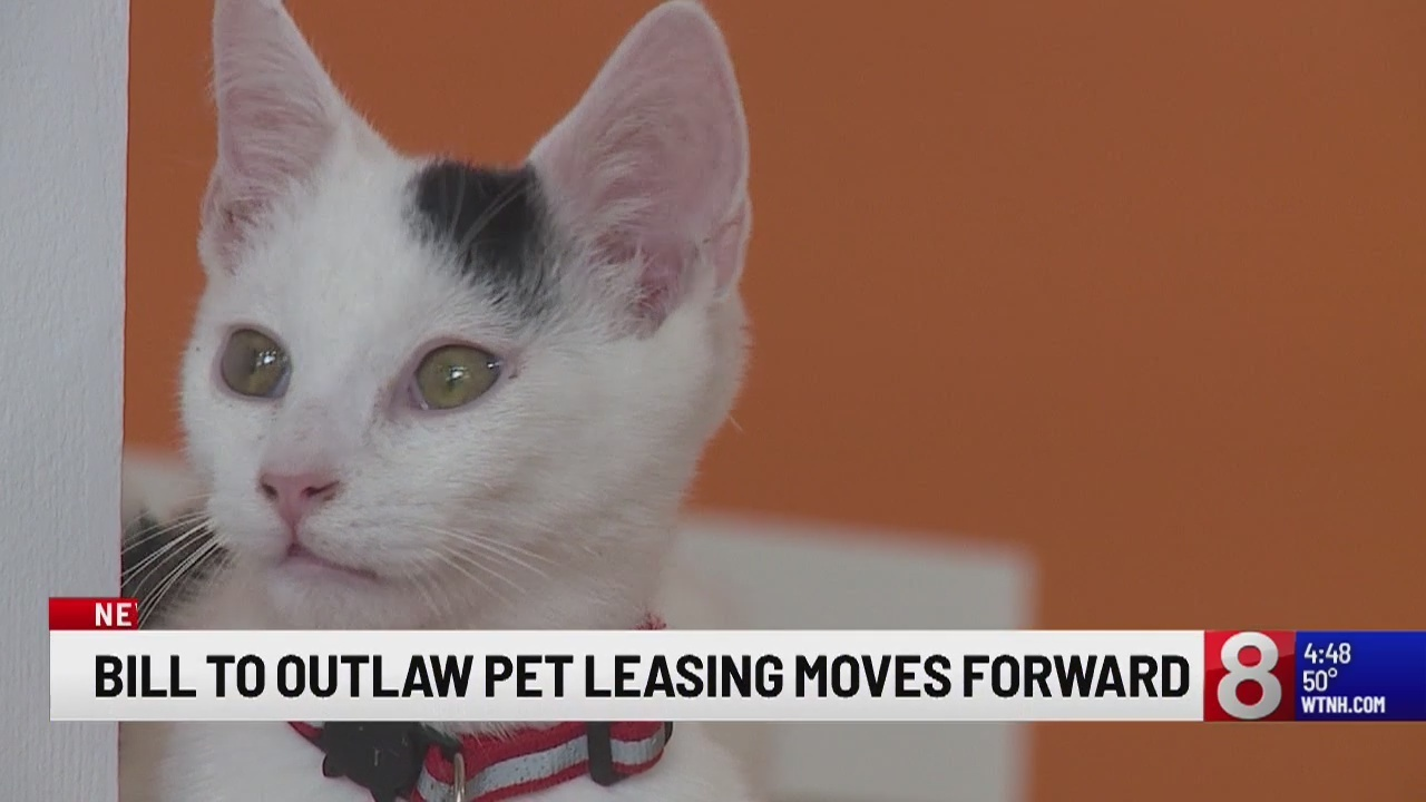Bill outlawing pet leasing moves to House of Representatives