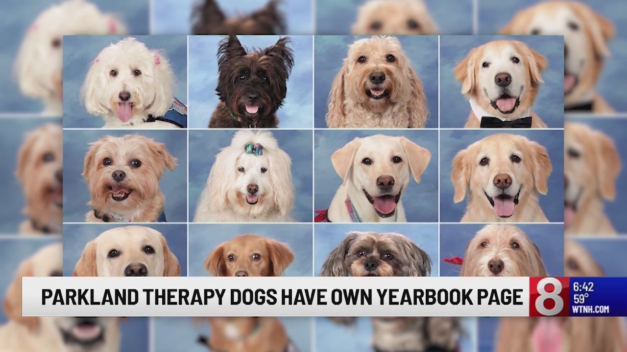 Therapy dogs at Parkland high school honored with page in yearbook