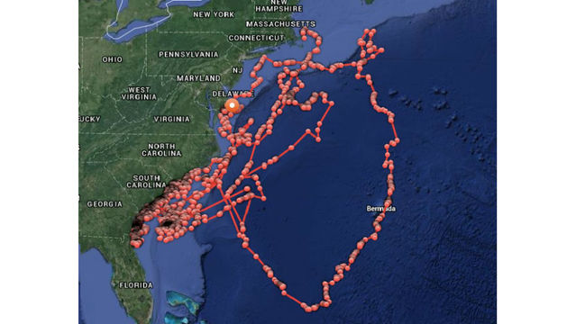 Giant Great White Shark Mary Lee Goes Viral Near Shore