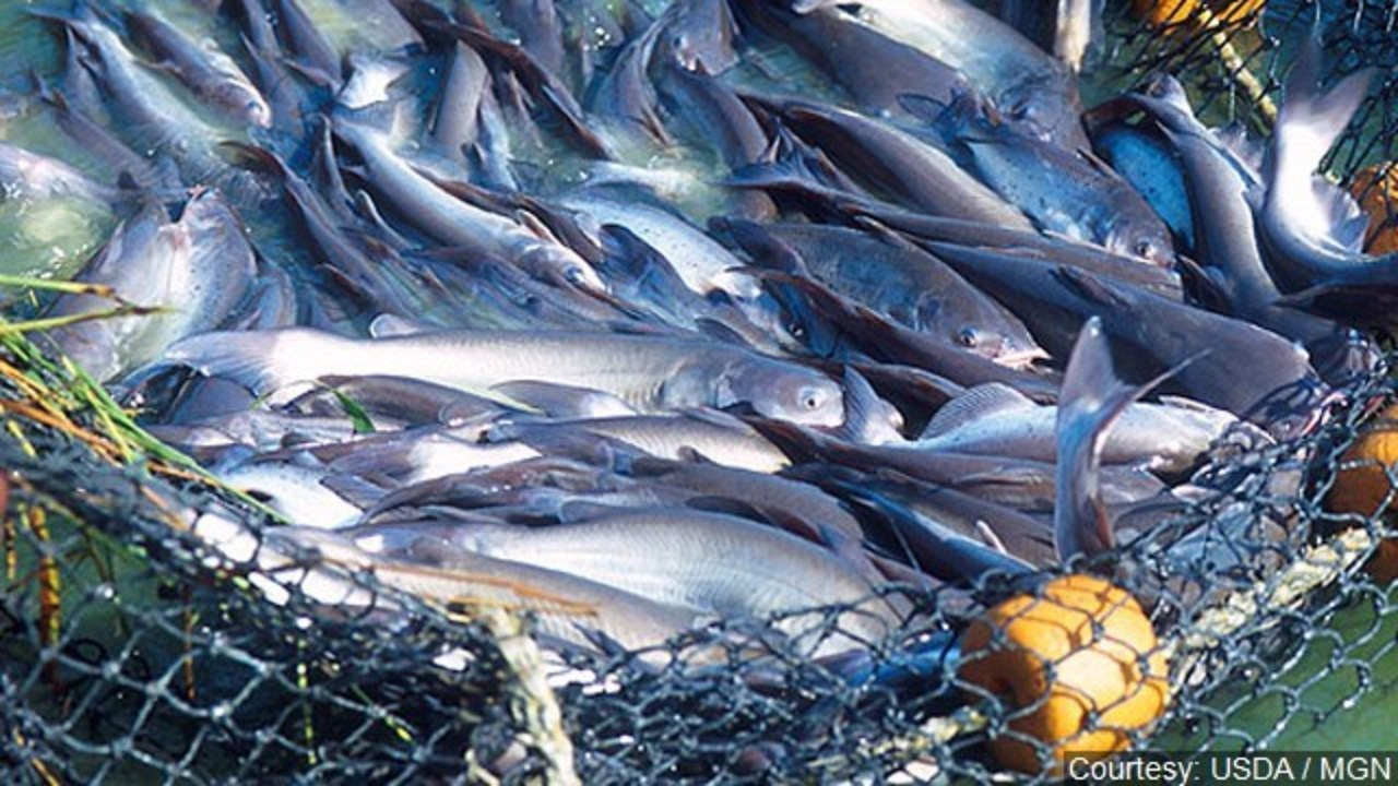 Connecticut stocks 19 bodies of water with 10,000 catfish