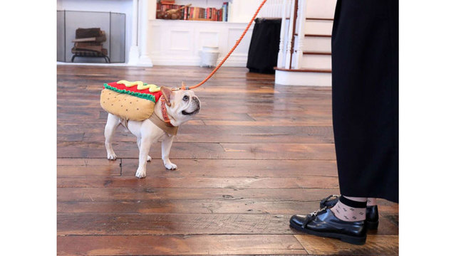 photo  sc 1 st  WTNH.com & This yearu0027s top pet Halloween costume trends