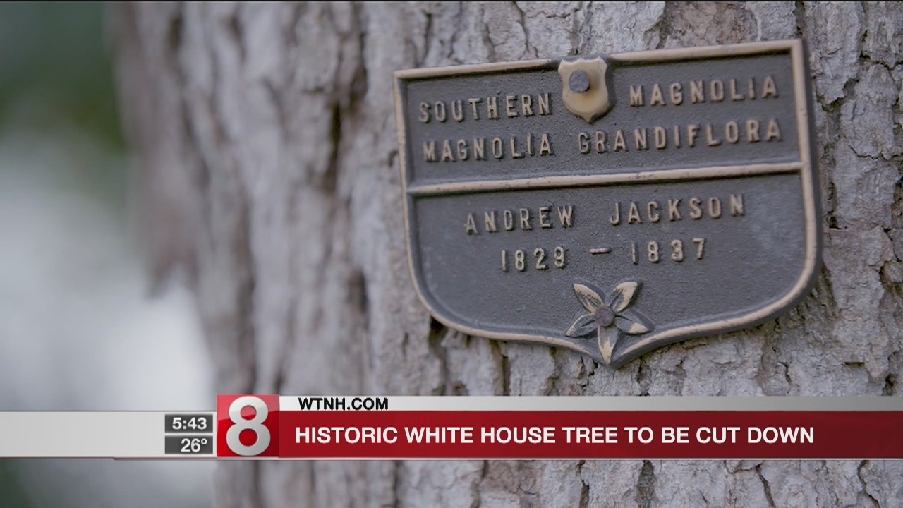 Part Of Weakened White House Magnolia Tree To Be Removed