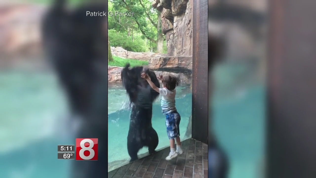 Bear jumping with 5-year-old boy has the internet jumping for joy