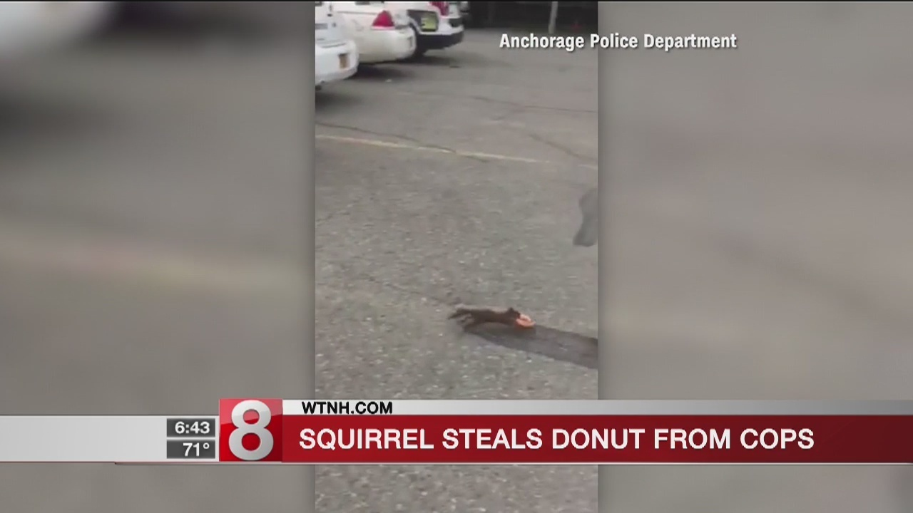 squirrel caught on tape stealing doughnut from police