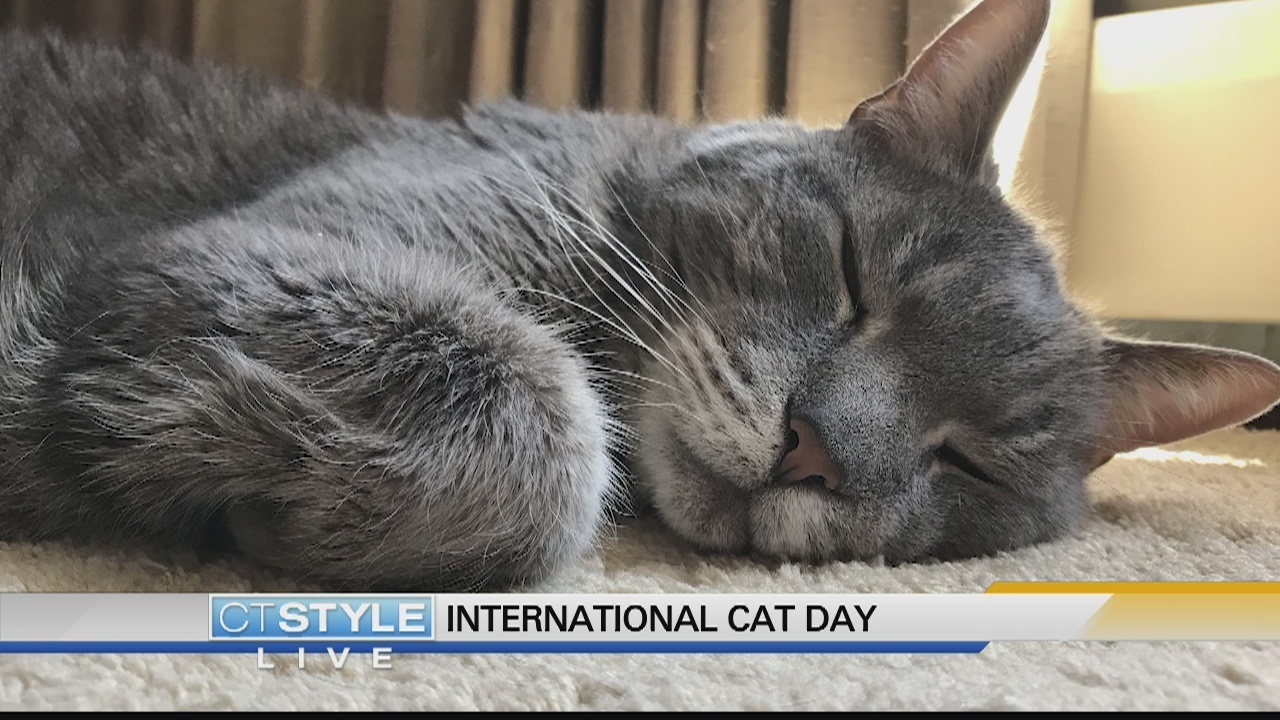 Today is Cat Day 81
