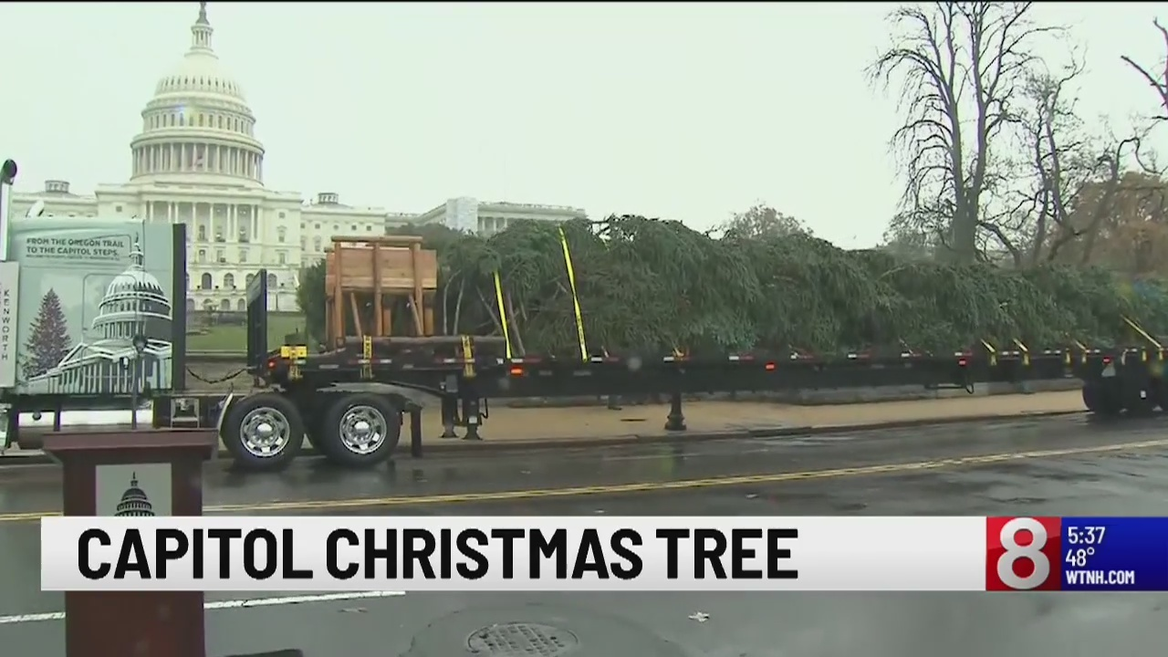 U S Capitol Christmas Tree Arrives From Oregon
