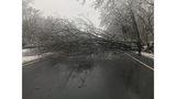 Tree comes down on southbound side of Merritt Parkway in Woodbridge
