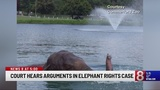 Hearing held Monday regarding Commerford Zoo elephants