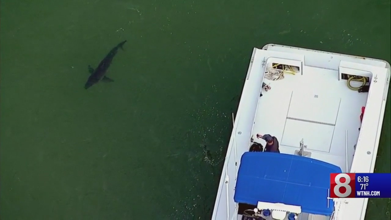 Great White worries some along Connecticut coast