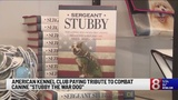 """American Kennel Club paying tribute to combat canine """"Stubby the War Dog"""""""