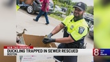 Duckling trapped in sewer rescued in Boston